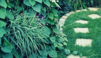 20+ Garden Bed Borders for Vegetable and Flower Gardens #tropischelandschaftsgestaltung