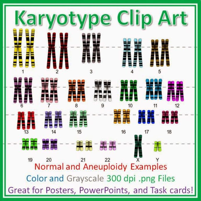 My Students Have Always Been Fascinated With Karyotypes I Usually Teach About Karyotypes Right After Long Unit On Cellular Re Task Cards Chromosome Teaching
