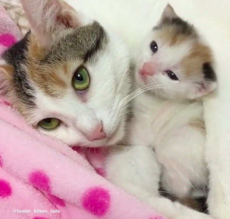 Cat Mom Rescued Along With Her Surviving Kitten She Wouldn T Let Her Go Love Meow Cat Cuddle Pretty Cats