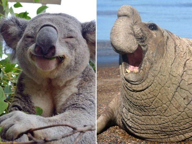 So Sieht Es Aus Wenn Man Tieren Witze Erzahlt Nichts Ist So Ansteckend Wie Das Lachen Dieser 15 Frohlichen Flauschis D D D