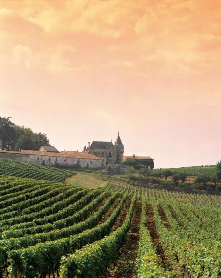 Sunset over the vineyards, Burgundy