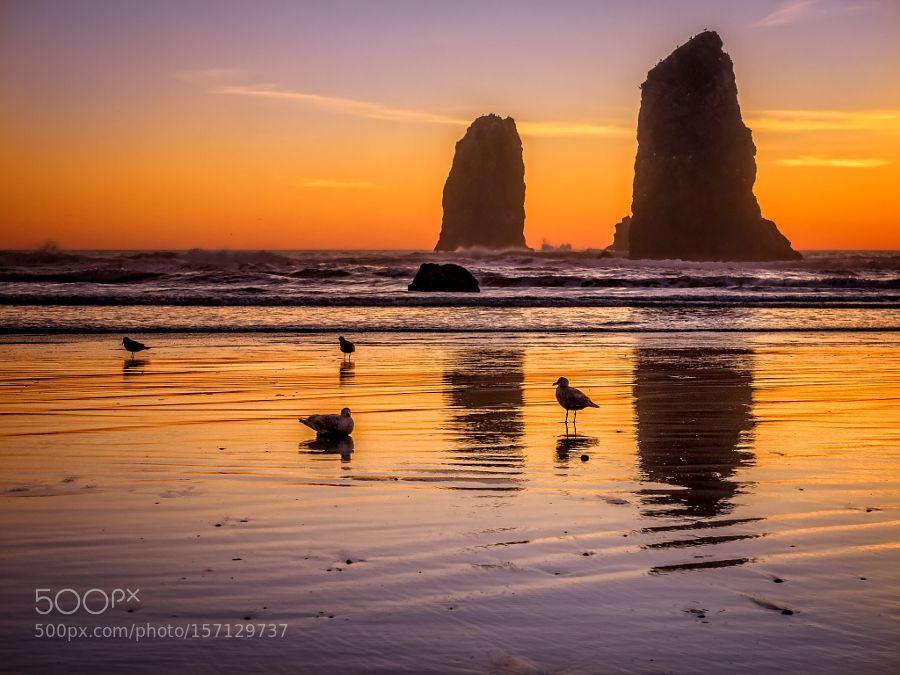 The Last Birds by ljames6581 via http://ift.tt/1stvAJ9