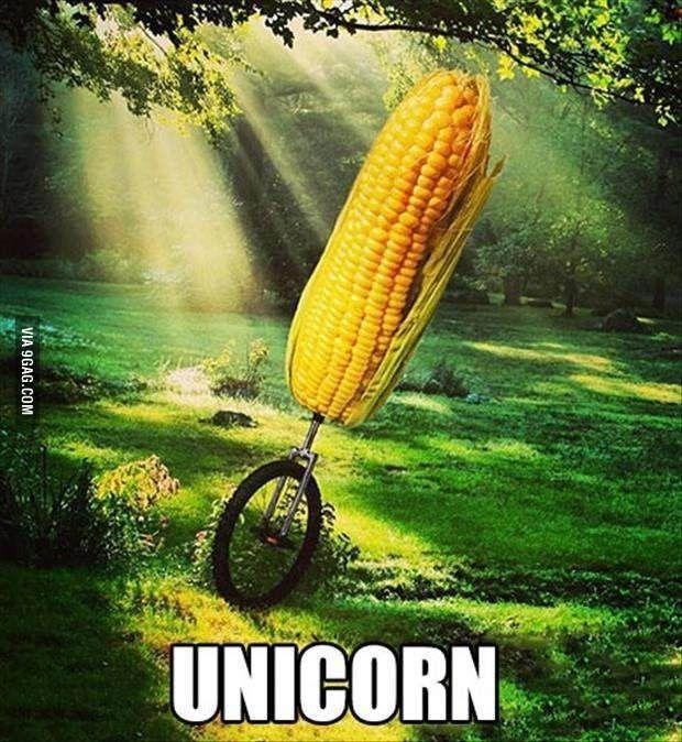 A real photo of Unicorn!