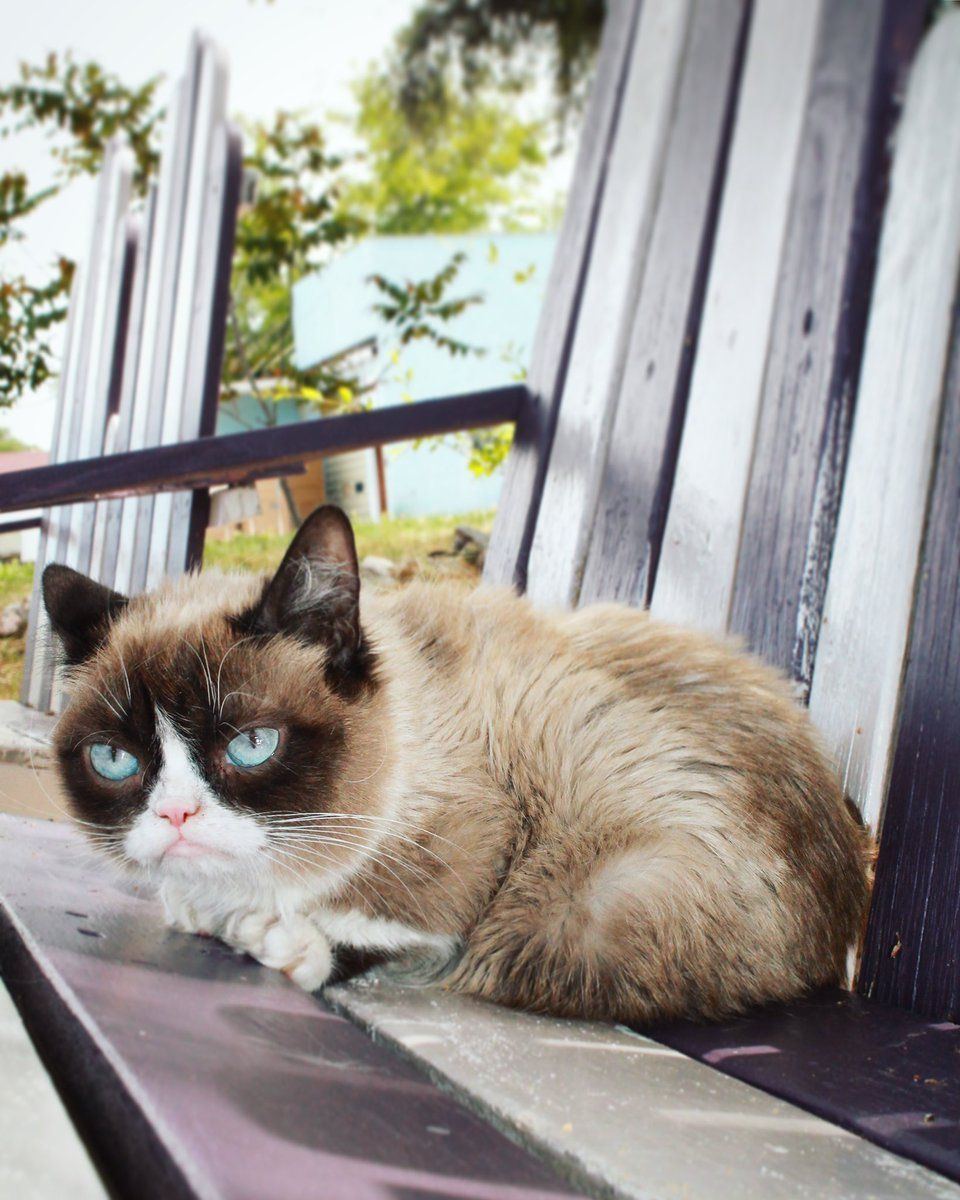 Pin by erp visions on grumpee cat Grumpy cat humor