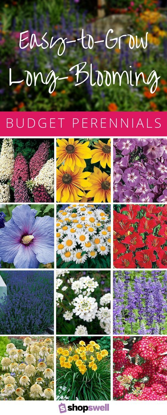 These 16 Garden Perennials Feature A Long Blooming Season Easy To