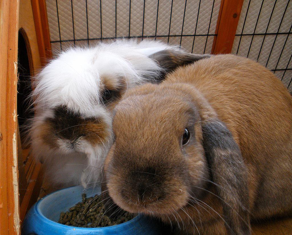 kinds of behaviors rabbits exhibit rabbit raising rabbits and