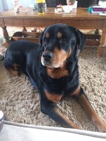 3 1 17 Tonawanda Ny Check Out Champ S Profile On Allpaws Com And Help Him Get Adopted Champ Is An Adorable Dog That Needs A With Images Dog Adoption Rottweiler Dog Dogs