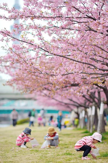 Say Hello To Spring With 35 Beautiful Photos Of Cherry Blossoms From Around The World Cherry Blossom Photo Beautiful Photo