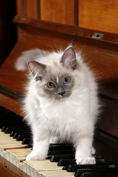 Catmusic Definition Of Love Cats Animals