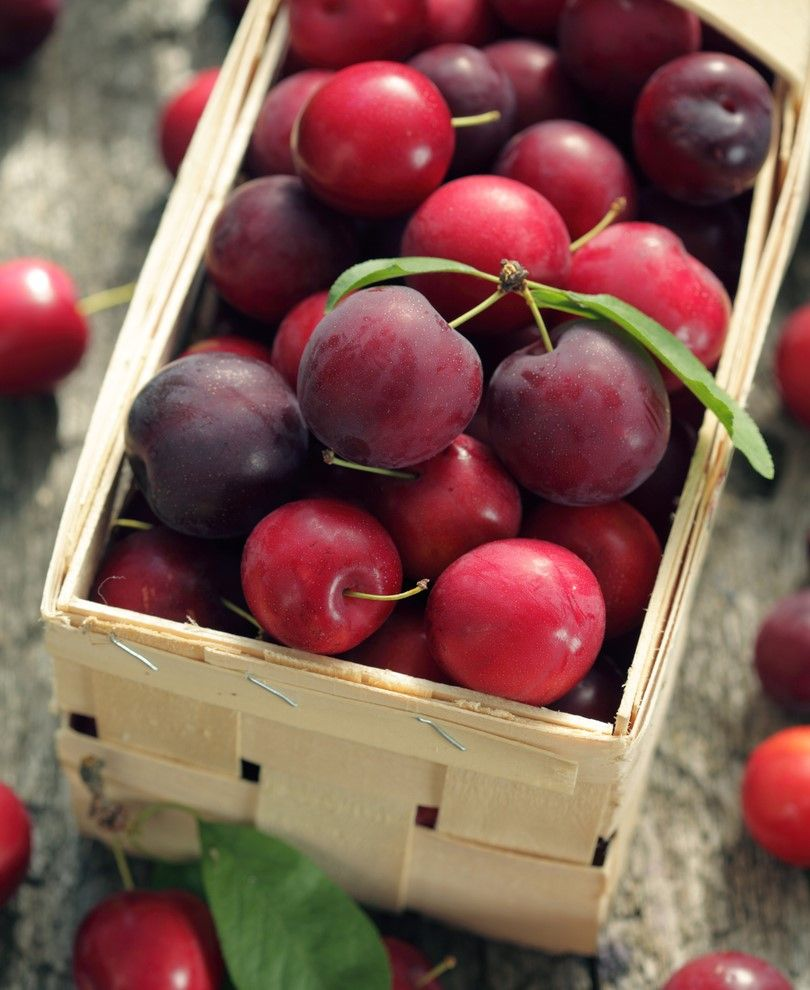 Nadia Cherry Plum Dwarf Fiberfruits This New Rare Cherry And Plum Cross From Australia Has A Delicious Combination Of Plum Fruit Fruit Trees For Sale Fruit