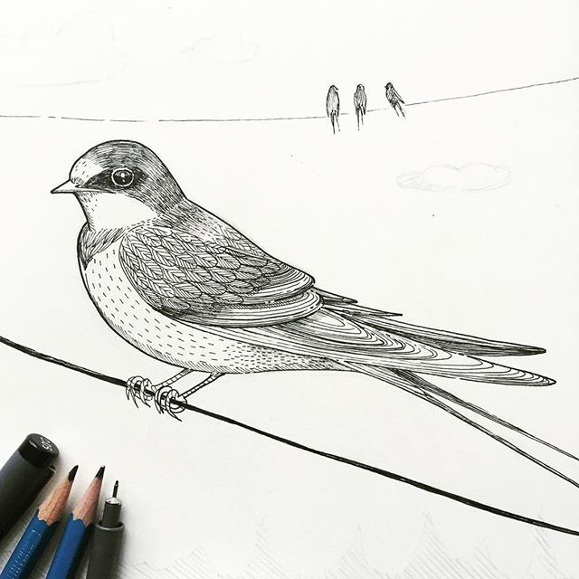 A Barn Swallow In My Sketchbook Today . If You Haven't