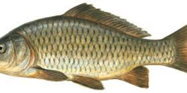 Pin By Suzana Makic On Riba Fish Pet Riba Catfish