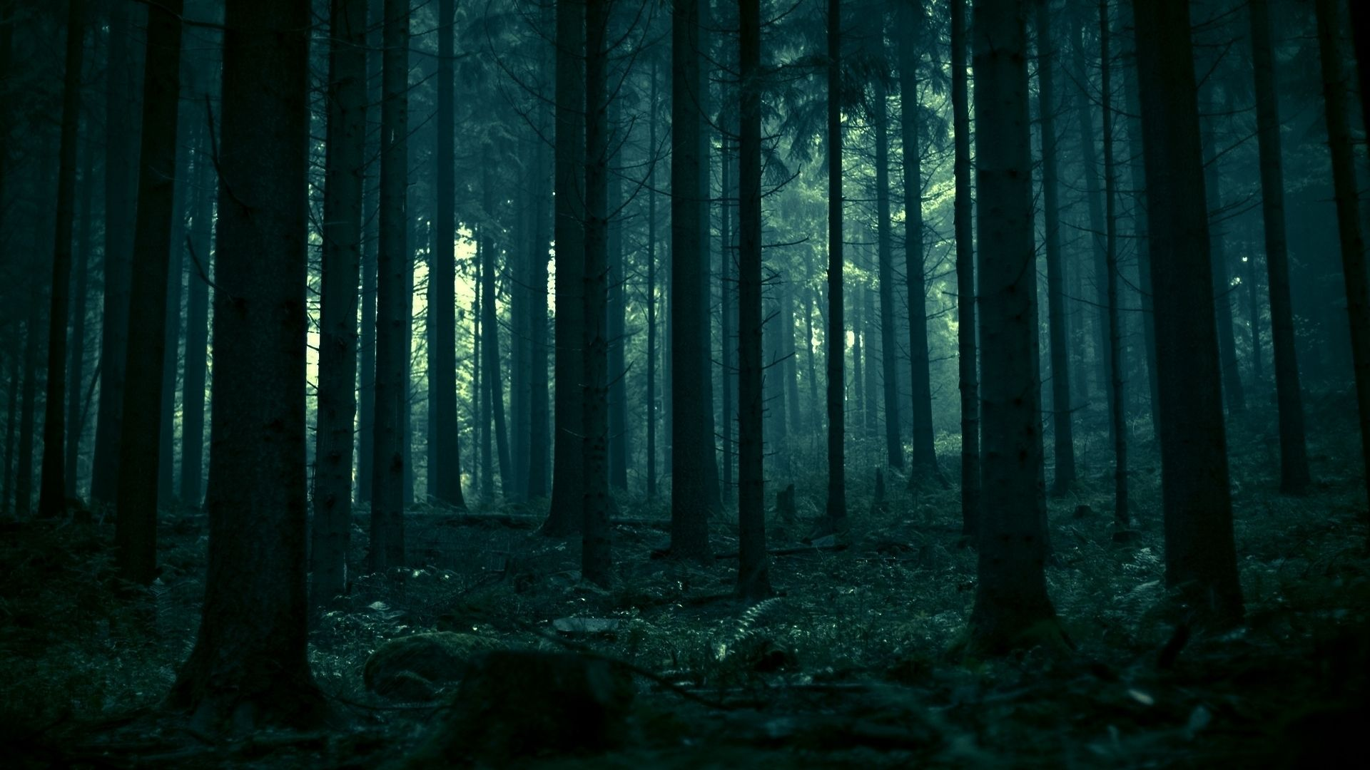 Dark Forest Wallpaper Forest Wallpaper Dark Forest Forest Photography