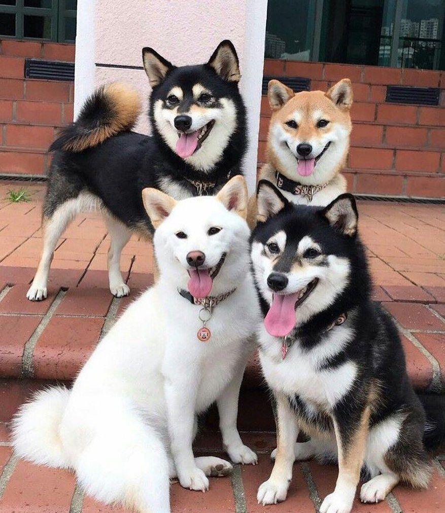 Pin Von Mr Auf Animals In 2020 Susse Tiere Niedliche Tierbabys Akita Dog