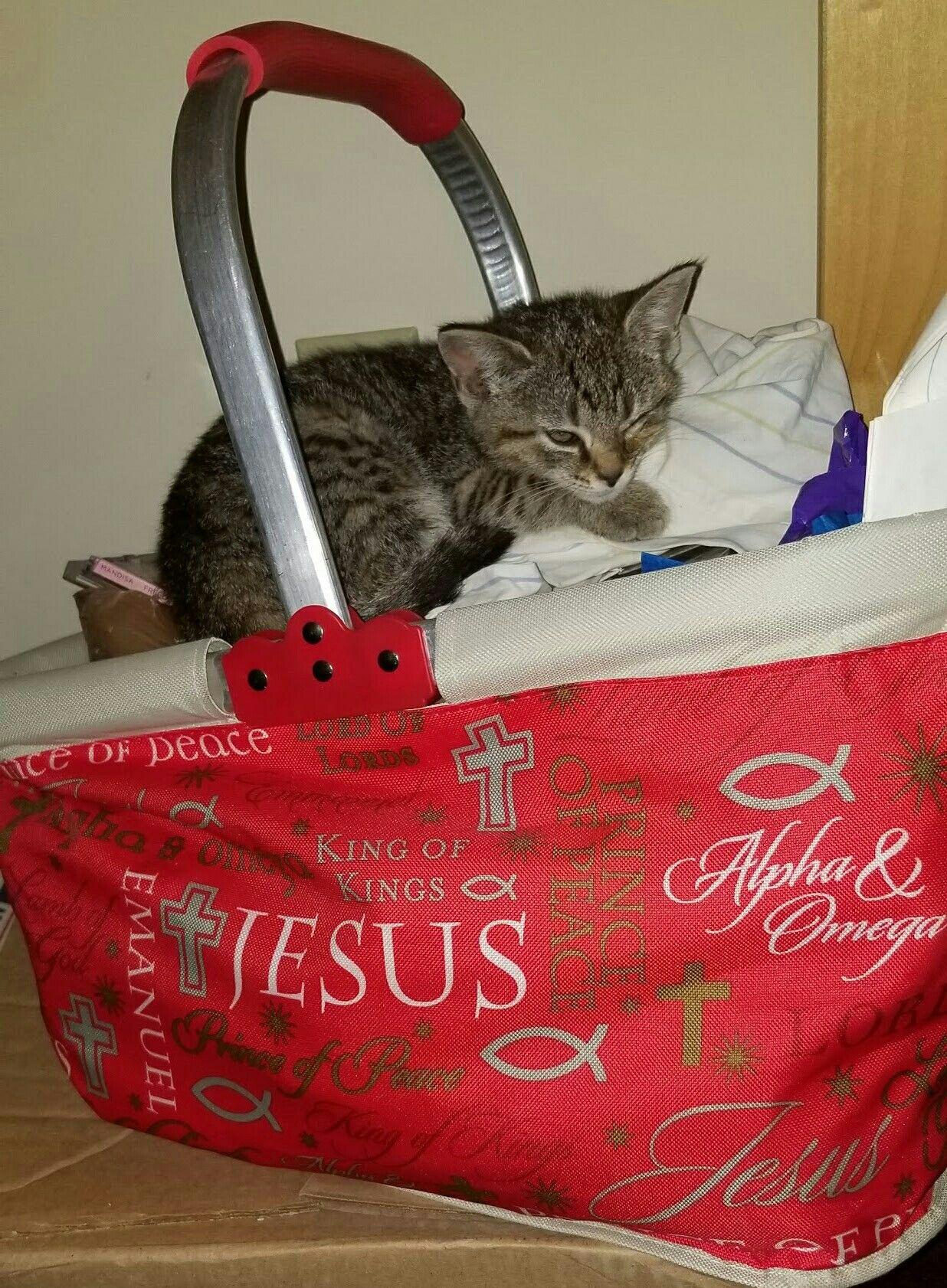Oh How I Love Jesus Kitten Cats And Kittens Kittens Kitten