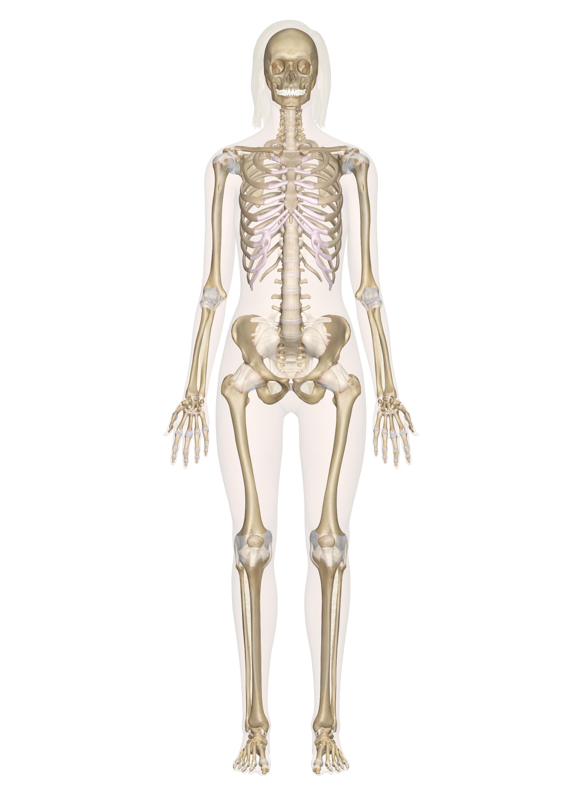 Pin de Lori Nelson en Skeletal System | Pinterest