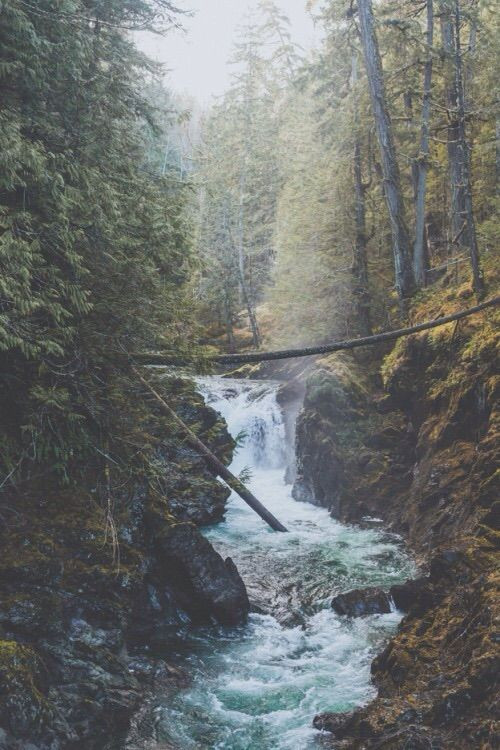 Image via We Heart It #autumn #fall #forest #hills #nature #river #scenery #silence #trees #water #wood #woods