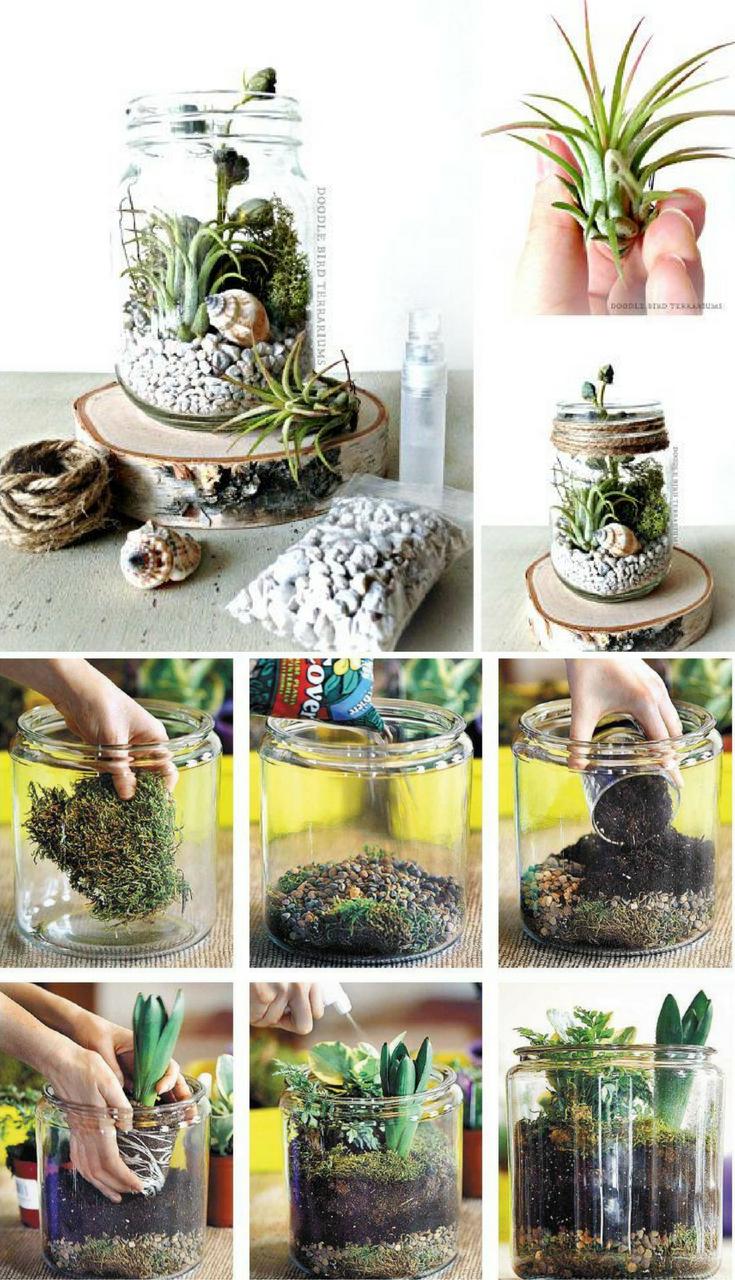 Mason jar terrarium kit