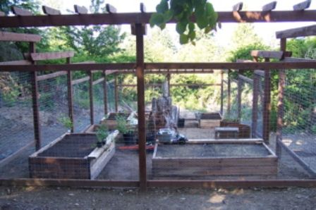 17 best 1000 images about House Deer proof Garden on Pinterest