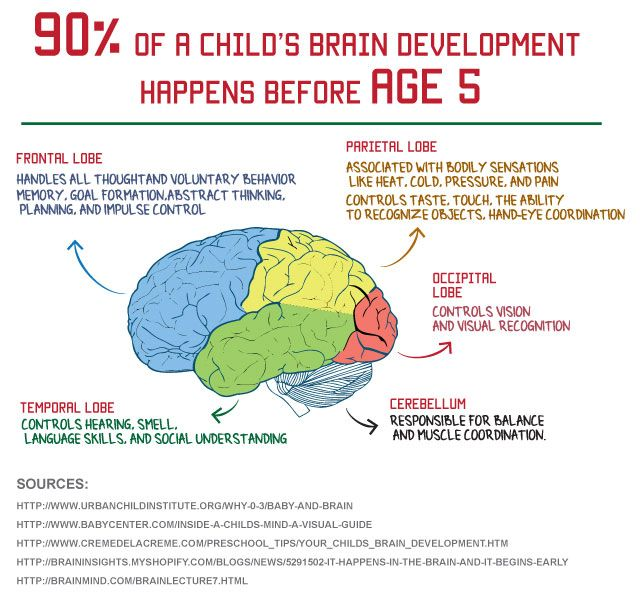 Our brain is especially fast in the early stages of life ...