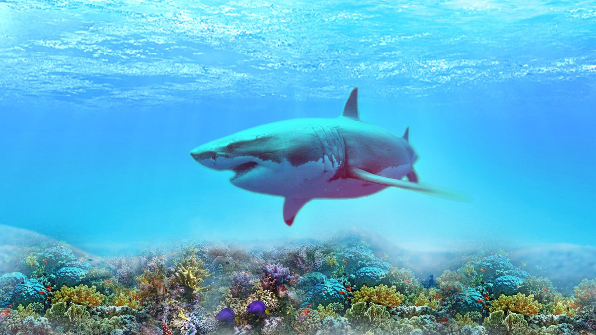 Are sharks mammals or fish the complete answer all about for Are sharks fish