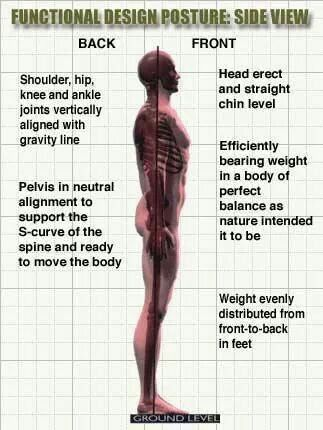 Correct Posture In From Sideview Posture Posture