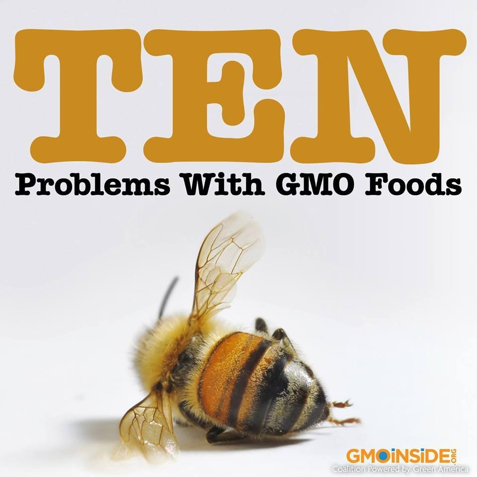 Genetically Modified Food And The Busines Behind Their Creation Ha Proved Troublesome In Many Way Here Are Ten Problem Genetics Advantage Disadvantage Essay