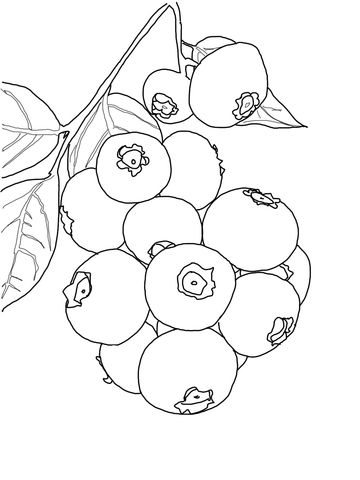 Blueberry Bush Coloring Page From Blueberry Category Select From