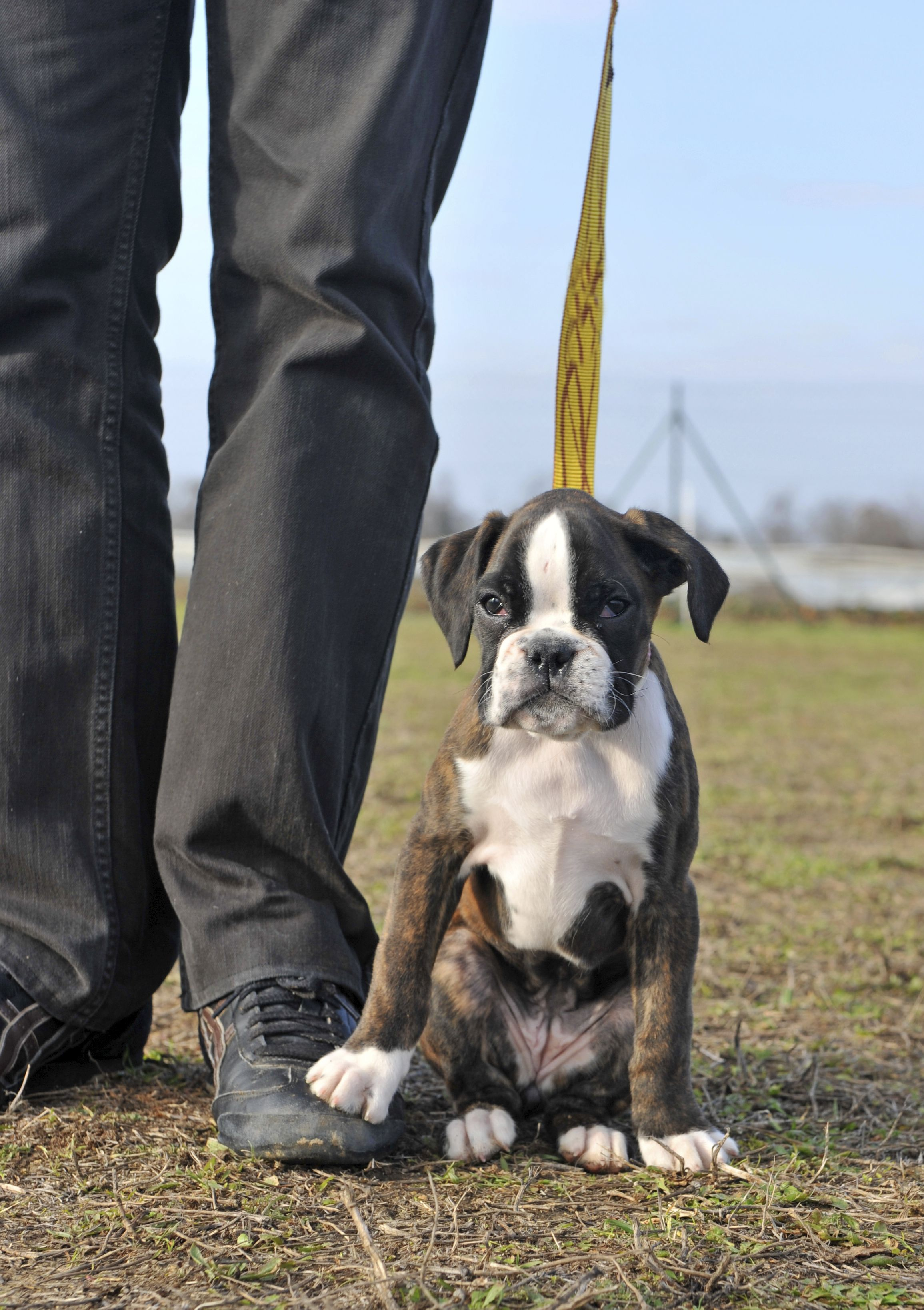 Training Your Dog Is Easy When You Know What To Do Learn More