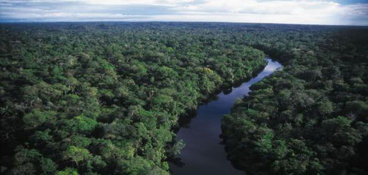 Iquitos Ayahuasca Healing Ceremony Experience Shaman Workshop Retreats