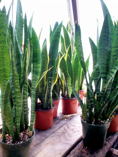 plantas altas exterior buscar con google