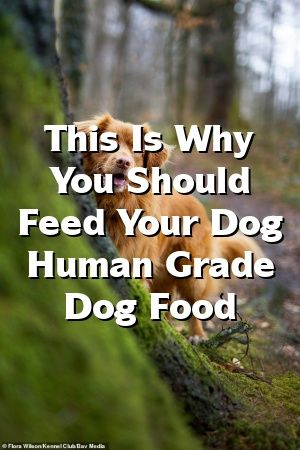 Jane Duncan Tells About This Is Why You Should Feed Your Dog Human Grade Dog Food  #моясобака   #dogtips  #dogs  #yorkshireterrier  #WestHighlandTerrier  #pets  #huntingdogs  #puppies
