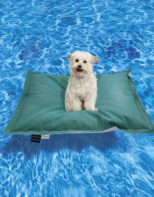 Check out this four-legged friendly pool float made special for your pet so the whole family can enjoy a summer swim!