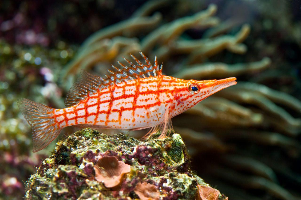 Cá là gì và những điều thú vị về cá có... | Mạng Thủy sản Việt Nam