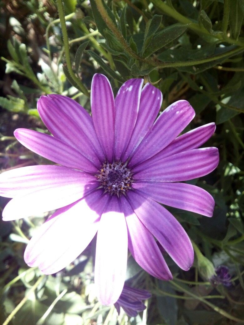 Pin By Yoselin Vazquez On Flowers Pinterest Flowers