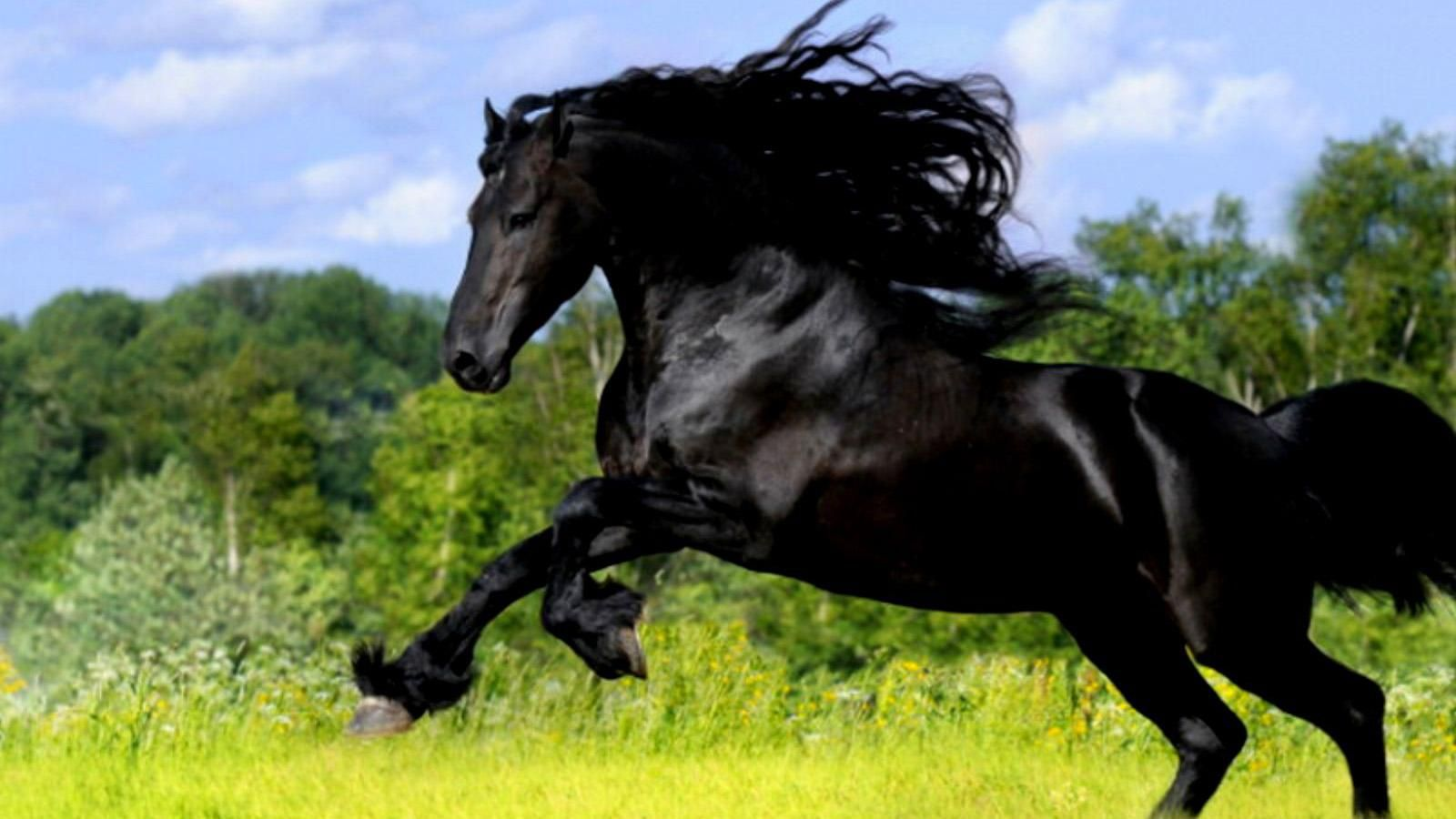 Beautiful Wallpaper Horse Android - 23f0ed56189f7919631eabda0afdb486  Collection_68125.jpg