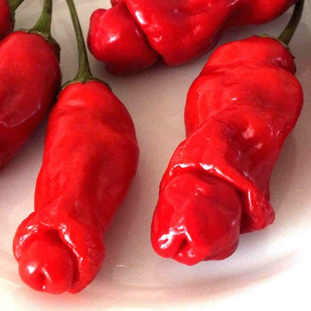 100 Pcs,worlds Hottest Pepper Seeds,mixed Hottest Pepper Rare Chili Pepper Seeds,plus Mysterious Gift Big Sales!!