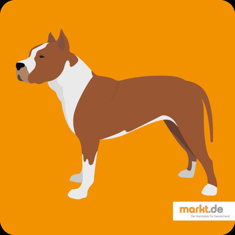 Amerikanischer Pittbull Terrier Rasseportrait Terrier