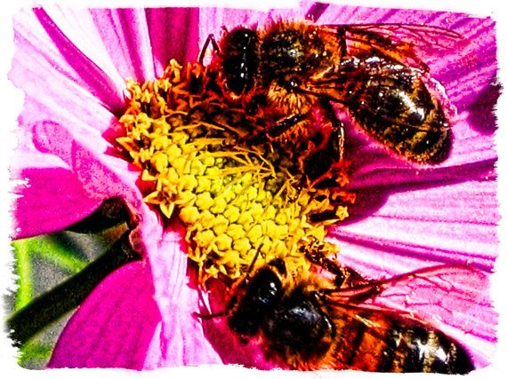 Bees in Summer by SnapHarmony on Etsy