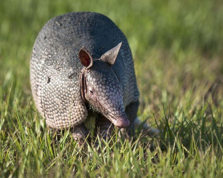 florida wild life | Florida Wildlife by Debbie Tubridy | Animals