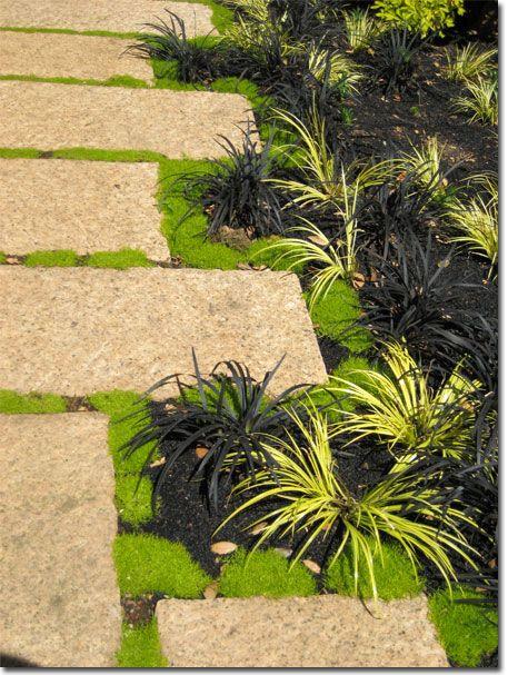 Granite black mondo grass acorus ornamental grasses for Dark ornamental grasses