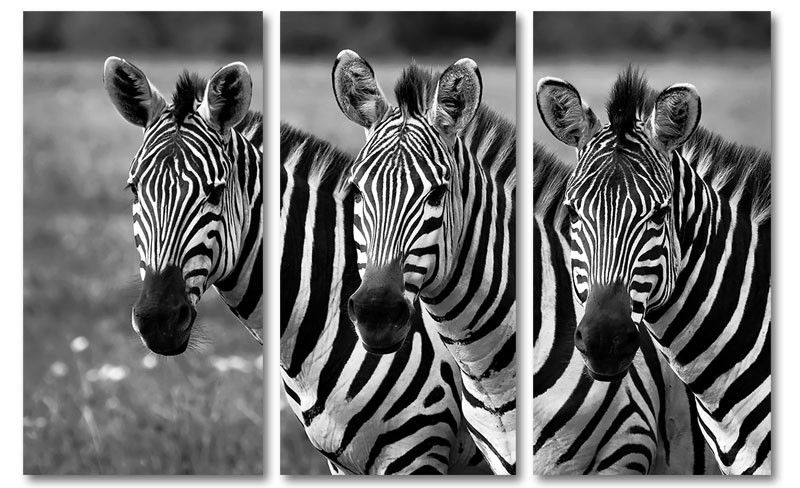 Zwart wit foto schilderij drie zebras drieluik foto zwart wit foto schilderij drie zebras drieluik foto schilderijen dieren op canvas pinterest third and canvases altavistaventures Image collections