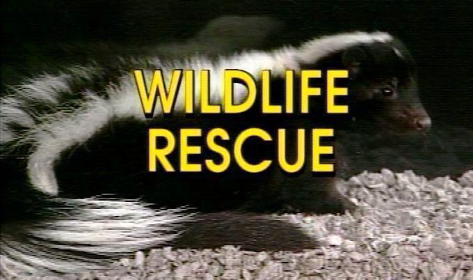 Image from http://www.unitedanimalrescuers.com/images/links/wildlife_rescue.JPG.