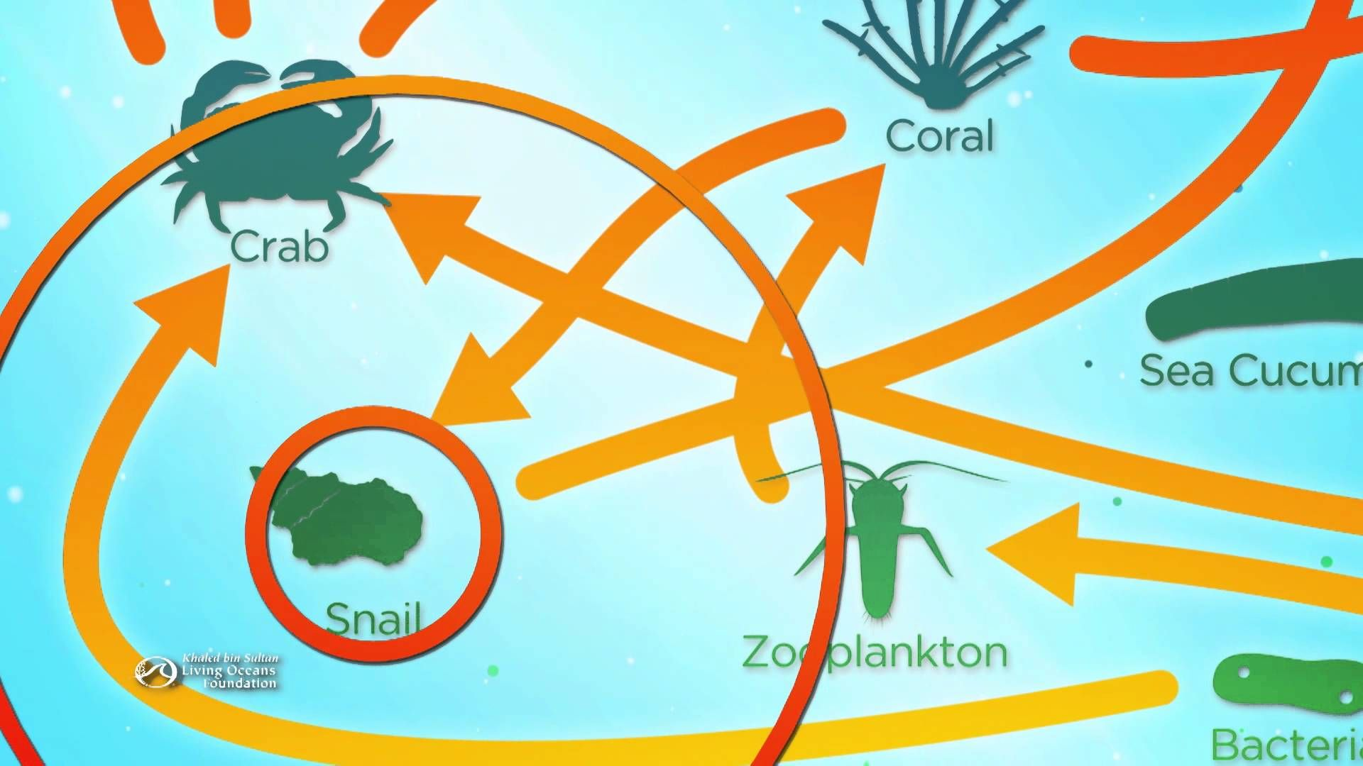 Coral Reefs Are An Ecosystem That Supports Millions Of
