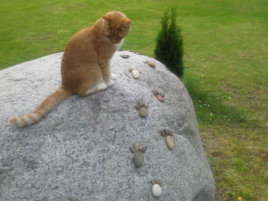 Tassunjäljet kivellä