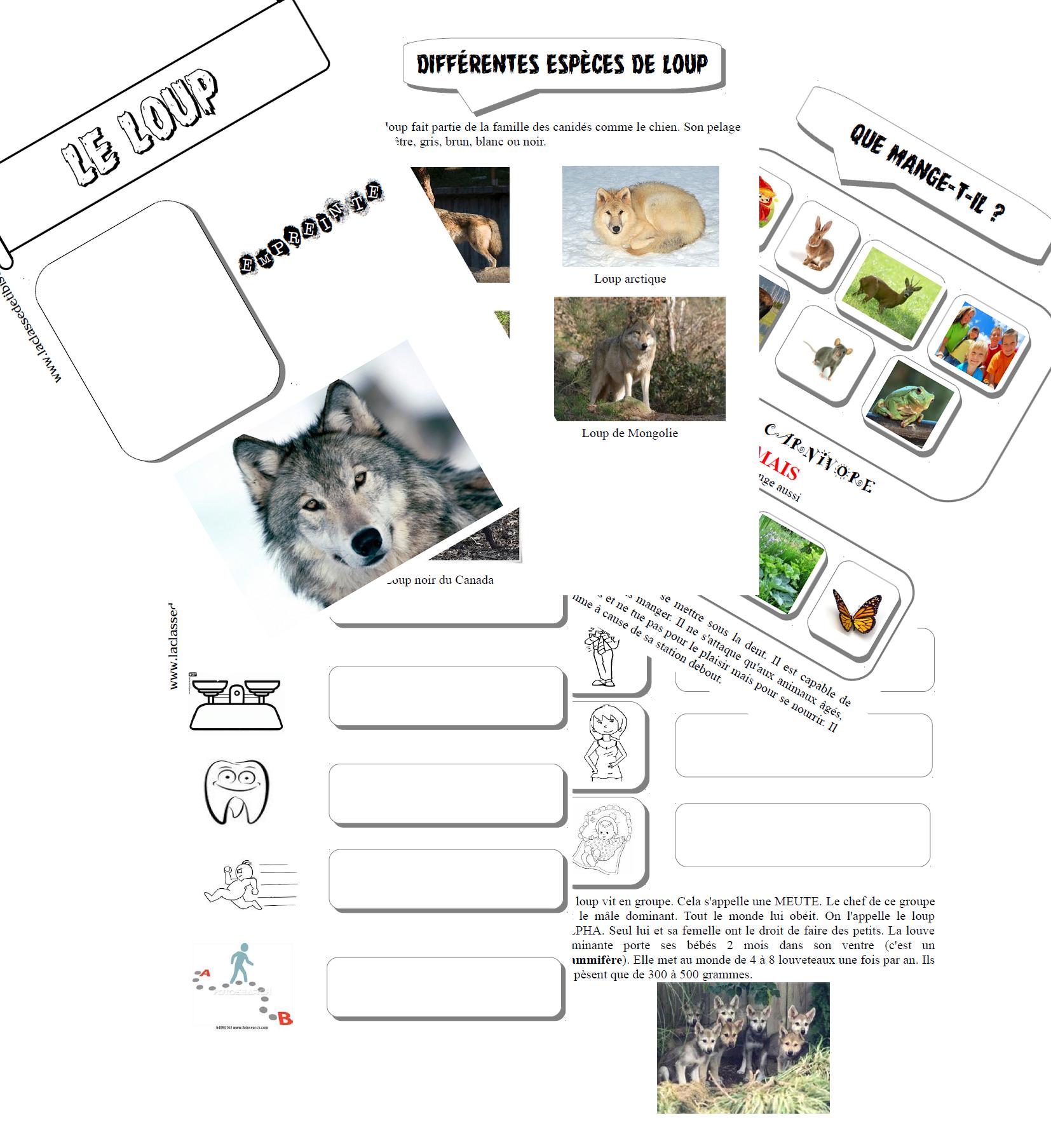 Le loup dossier documentaire compl ter ms au fil des blogs pinterest le loup - Differentes especes de pins ...
