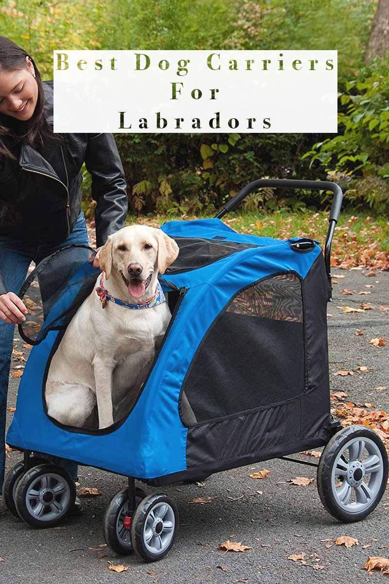 Best Dog Carriers For Labradors Dog Carrier Dog Bike Carrier