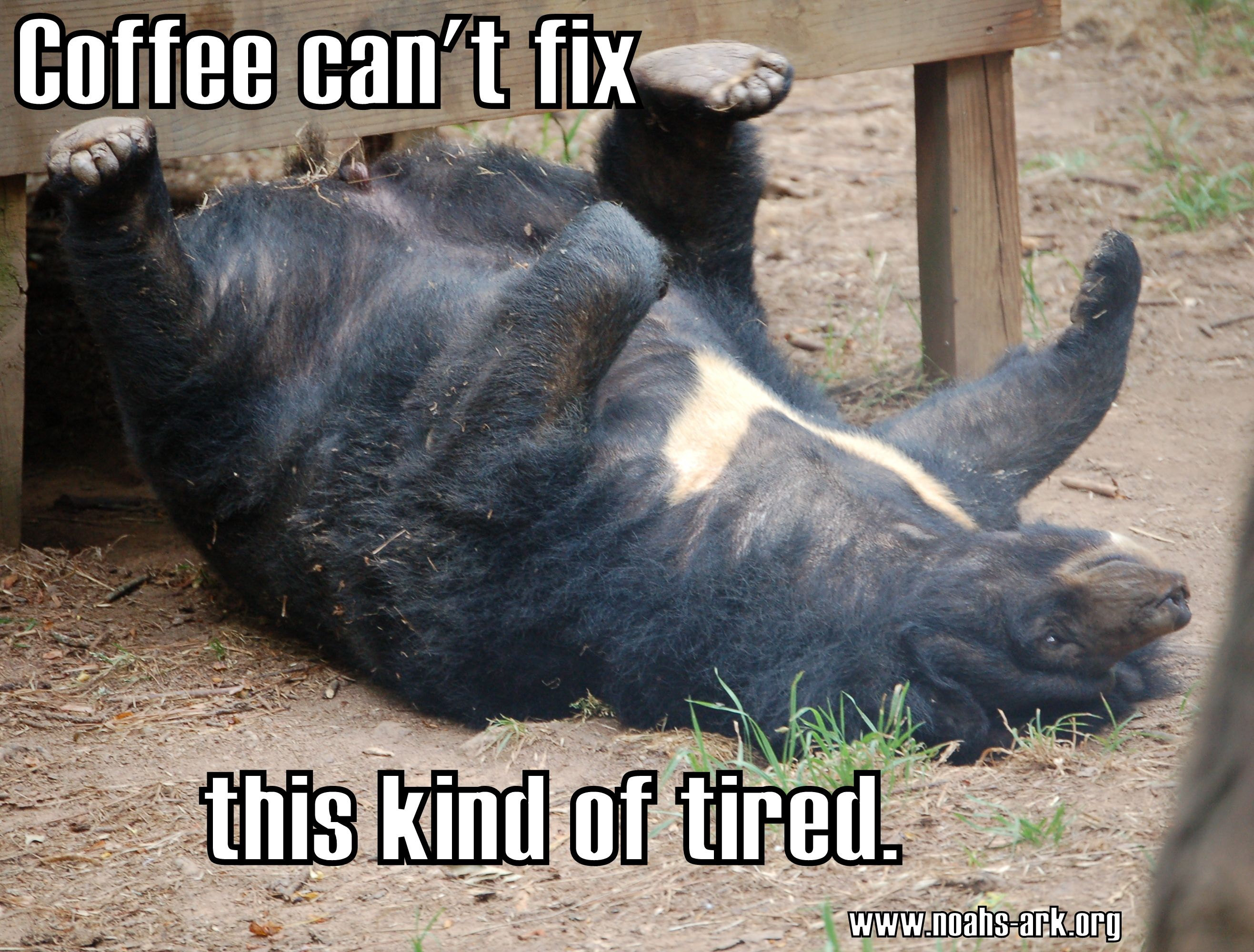 Funny Memes For Lovers : Coffee can't fix this kind of tired www.noahs ark.org #noahsark