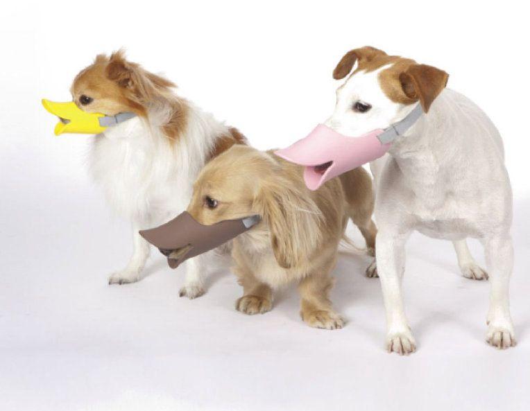 どんな犬もアヒル口になる口輪 Quack クァック って知ってる 犬の口輪 犬 ペット