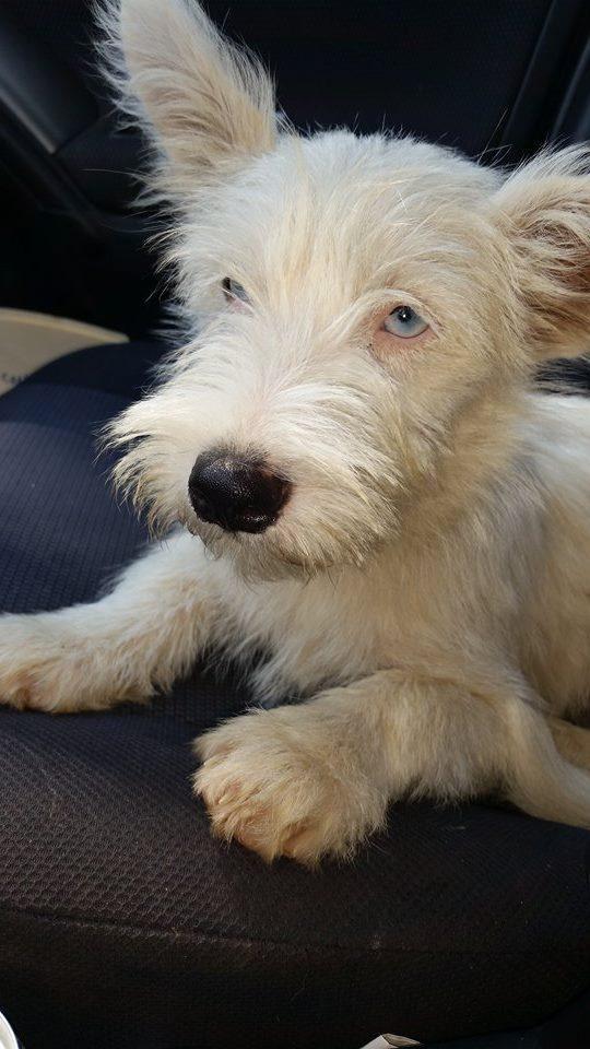 Adopt Nova On Puppy Adoption Kitten Adoption Pets